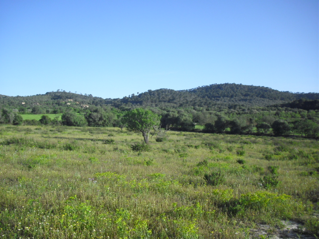 Building Land near Cas Concos, Mallorca