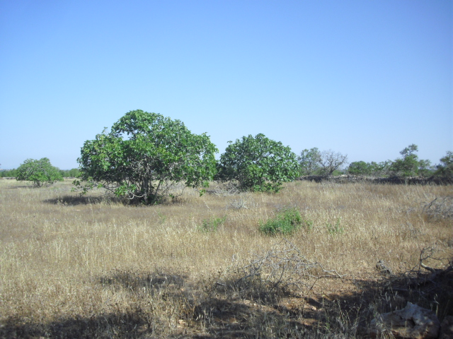 Country Plot near Ses Salines
