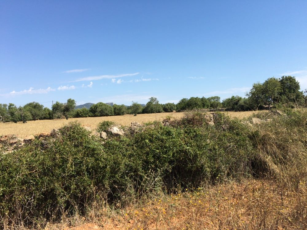 Country Plot near Cala d'Or