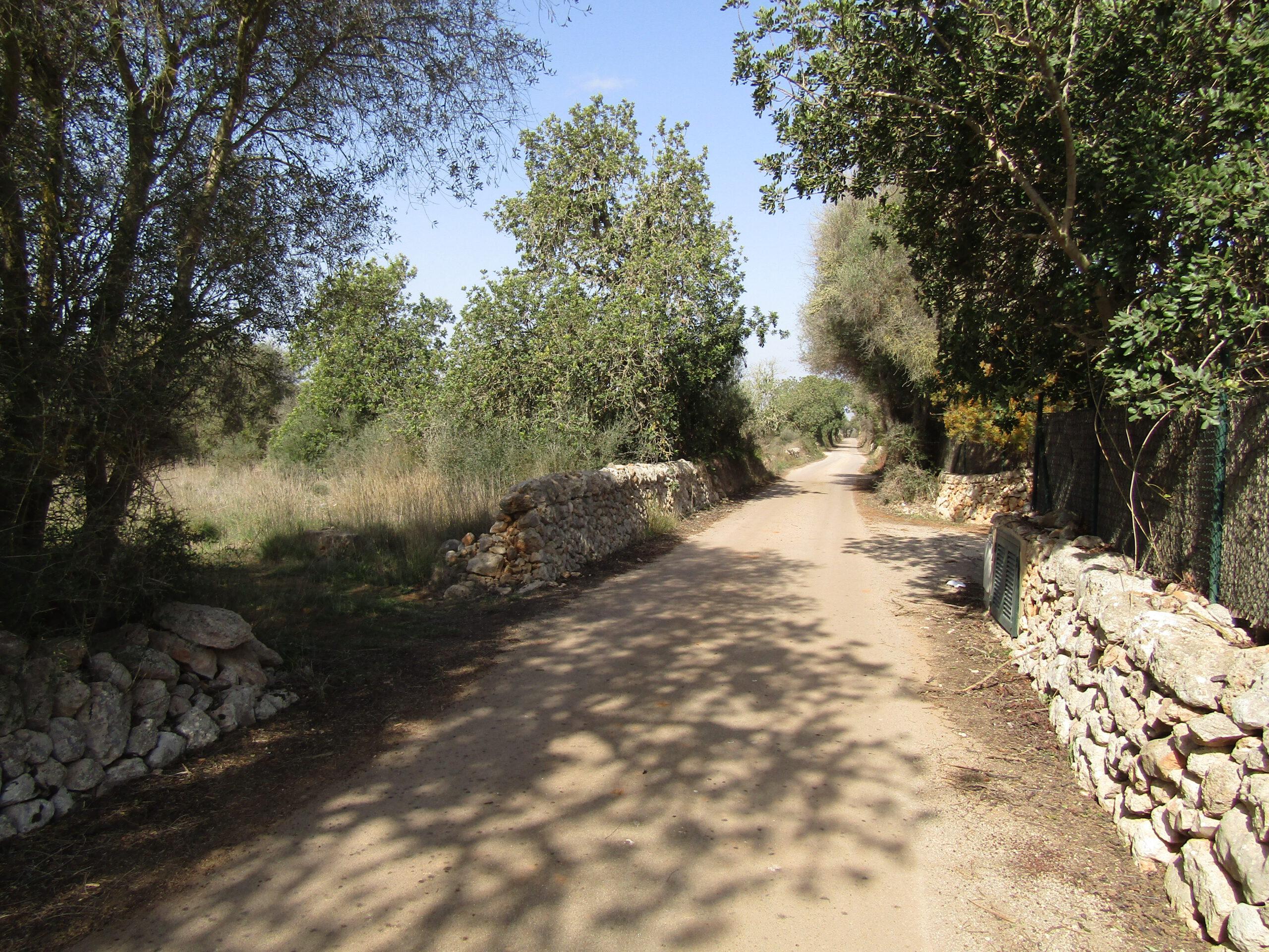 Country Land Near Santanyi, Mallorca