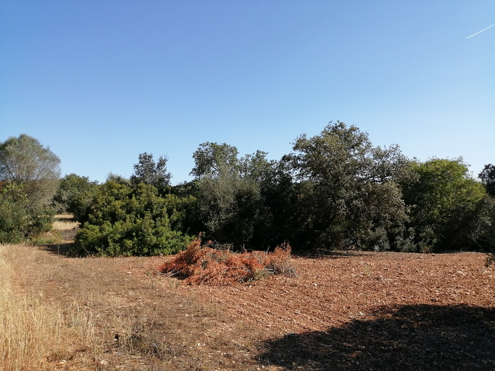 Country Land near Cas Concos